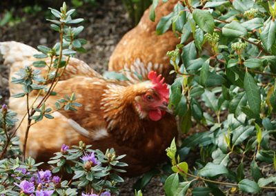 hens Brookvale Self-Catering Cottage, County Down